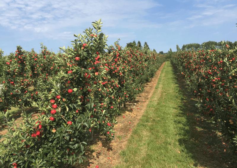 nybro frugtplantage